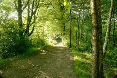 Woodland walk Royalty Free Stock Images