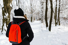 Woodland walk in wintertime Stock Photo