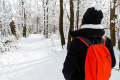 Woodland walk in wintertime Stock Images