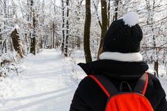 Woodland walk in wintertime Stock Photo