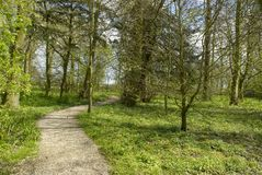Woodland_walk35 Royalty Free Stock Photography
