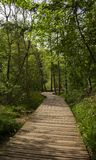 Woodland Walkway Stock Images
