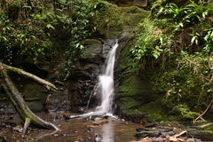 Woodland Waterfall. A woodland waterfall in Somerset, England stock photo