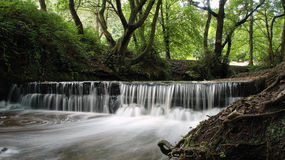 Woodland waterfall. Water falling over a ledge in a woodland Royalty Free Stock Image
