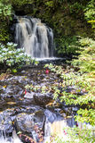 Woodland waterfall Stock Images
