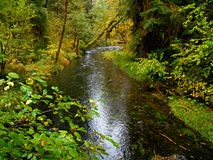 Woodland Waterway. Delta Creek in the old growth forest at Delta Campground - near Blue River, OR stock photo
