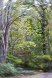 Woodland whirlwind. Blurred fall color woodland scene with rotational streaking. Colors include gray, green, yellow, and orange Stock Photography