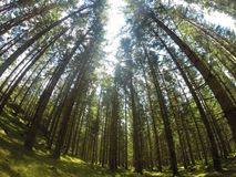 Woodland. In Sweden. shot with a gopro trees nature sunlight moss earth beauty Stock Photos