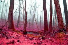 woodlands Στοκ εικόνα με δικαίωμα ελεύθερης χρήσης