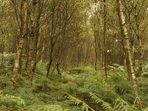 Woodlands foliage Royalty Free Stock Photography