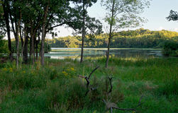 Woodlands and Marshes of Normandale Lake Royalty Free Stock Images
