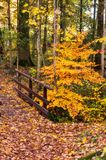Woodlands path way and wooden bridge in autumn. Fall with colorful foliage royalty free stock image