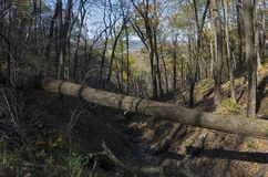 Woodlands and Ravine at Wyalusing stock photos