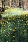 Woodlands in springtime Stock Images