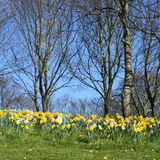 Woodlands in springtime Stock Photo