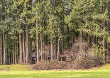 Woodlands state parks Washington state. Royalty Free Stock Image
