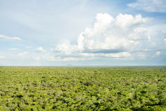 Woodlands from Top of Black Rock, Kasungu Royalty Free Stock Image