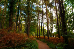 Woodlands Walkway Royalty Free Stock Photos