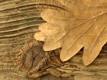 woodleaf 库存照片