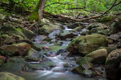 Woodline rzeka Obrazy Royalty Free