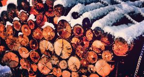 Woodlogs fotografie stock