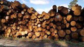 Woodlogs Royaltyfri Foto