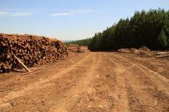 Woodlogs del árbol de pino en la plantación Fotos de archivo