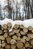 Woodlogs in het de winterbos royalty-vrije stock foto's