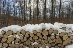 Woodlogs in het de winterbos stock afbeelding