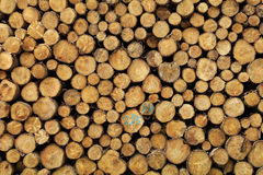 Woodlogs Royalty Free Stock Images