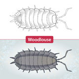 Woodlouse or armadillo bug  on white and on the textured gray background Royalty Free Stock Photography