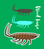 Woodlouse Insects Vectors Stock Photo