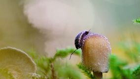 An woodlouse on mushroom stock footage