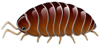 A woodlouse Royalty Free Stock Images