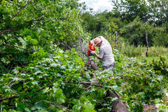 Woodman utilise sa tronçonneuse a coupé l'arbre image libre de droits