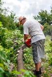Woodman utilise sa tronçonneuse a coupé l'arbre photo libre de droits