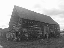 Woodoaks gospodarstwo rolne, klonu Przecinający UK 17 Fotografia Stock