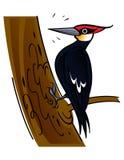 woodpecker Стоковое Изображение