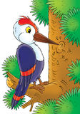 Woodpecker. Isolated clip-art and children's illustration for yours design, postcard, album, cover, scrapbook, etc Stock Photos