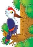 Woodpecker ilustração royalty free