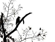 Woodpecker Imagens de Stock