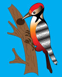 woodpecker Royalty-vrije Stock Foto