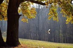 woodpecker Стоковое Изображение RF