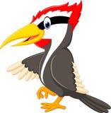 Woodpecker bird cartoon Royalty Free Stock Image
