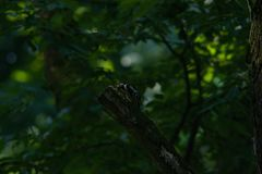 Woodpecker on a branch stock image