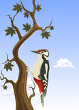 Woodpecker clinging to a tree trunk Stock Photo