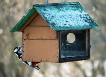 Woodpecker on feeder Royalty Free Stock Photography