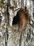 Woodpecker hole Stock Photography