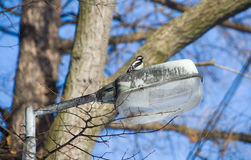 The woodpecker on a lantern Stock Images