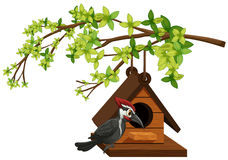 Woodpecker living in birdhouse. Illustration Stock Photography